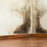 water damage restoration in anchorage, water damage repair anchorage, water damage anchorage,
