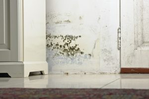 water damage restoration anchorage