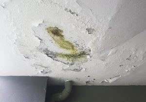 water damage cleanup anchorage